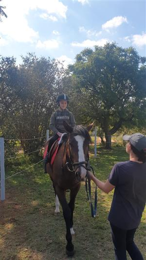 Legend Equestrians Start Your Horse Riding Today From Beginners to Advanced