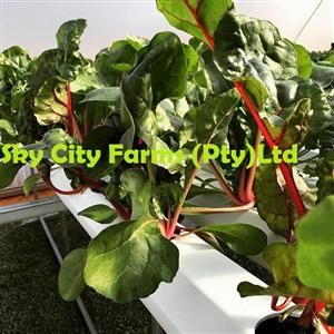 Hydroponics Growing System manufactures