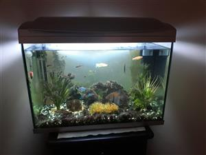 Hailea 65lt fish tank with accessories