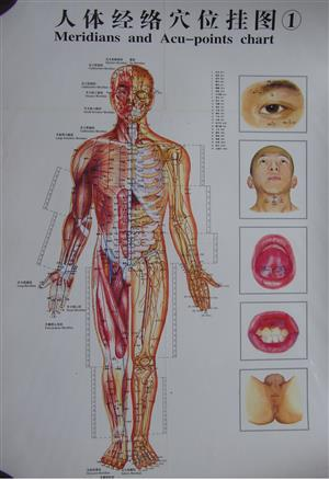 Acupuncture Points Chart - Meridians - Set Of 5 charts - Laminated