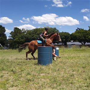 Horse paddocks available in Bethal