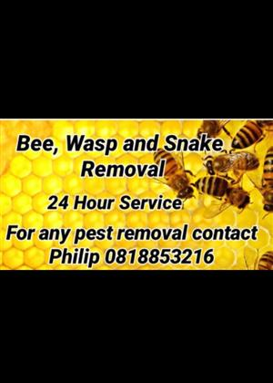 Bee Removal Vaal area