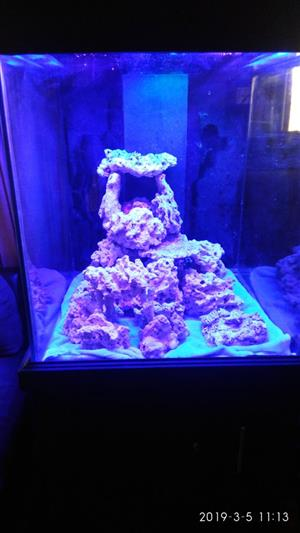Complete 70cm Marine Aquarium for sale. Plug and Play
