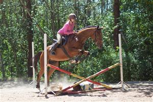 Tall Tb gelding with stunning movement