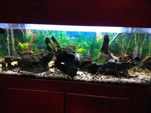 Fishtanks for sale