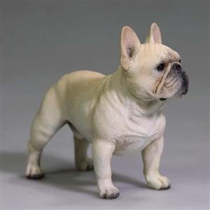 Unique French bulldog