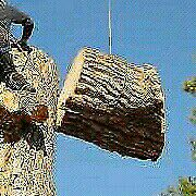 Moyo tree felling services (INSURED)