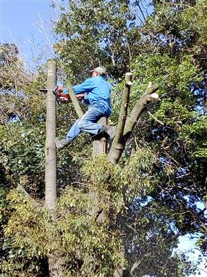 Tree felling Kyalami and Site clearing, Stump removal,Bush pruning and tree removal 0734421108