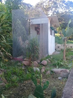 WALK IN AVIARIES FOR SALE - PRICE NEG.