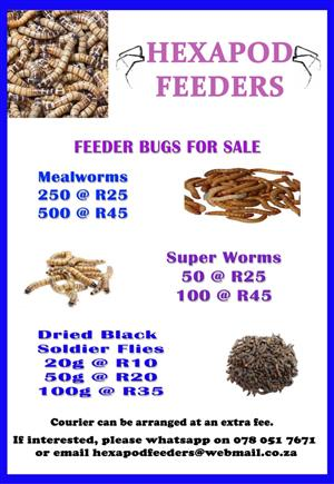 Mealworms and superworms for sale