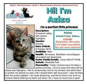 Look at all our poster kids! So many gorgeous rescue kittens to choose from at CatzRus