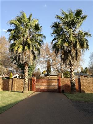 Two beautiful palm trees for sale