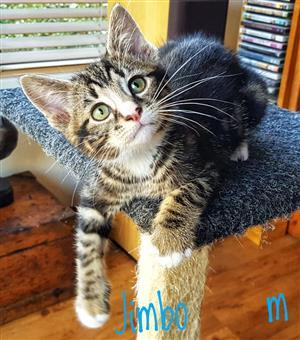 Beautiful kittens needing homes!
