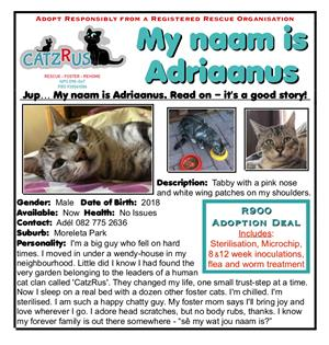 Adriaanus wants to be your guy - a cat to adopt from CatzRus Pretoria