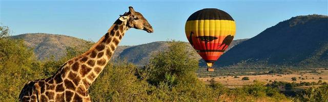 Pilanesberg Safari Tour | Full Day