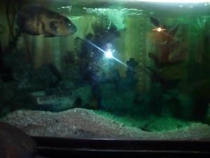 Stunning 1.500m fish tank