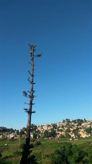 EMMANUEL TREE FELLING
