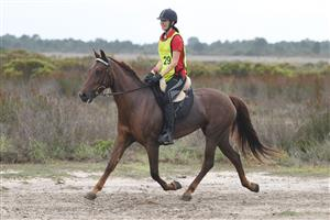 Lovely Boerperd mare for sale
