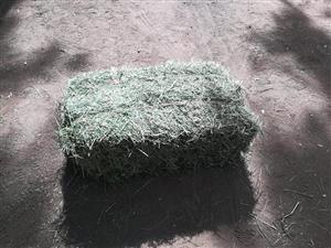 Fresh Cut of Alfalfa Hay for sale