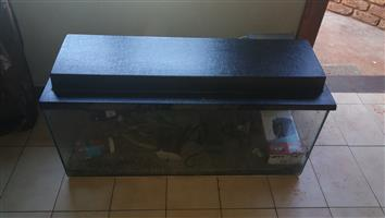 fully equipped fish tank