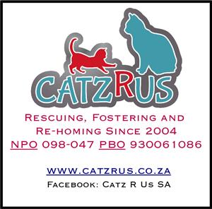 CatzRus is a registered NPO and PBO. We rescue, foster and rehome cats and kittens.
