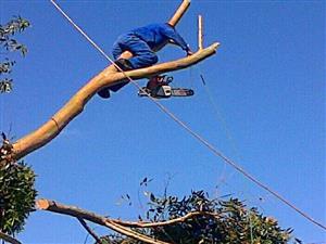 Bulelani tree felling