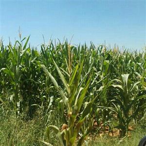 288ha high potencial farming