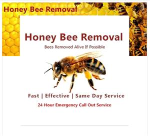 Honey Bee Removal & Relocation Service
