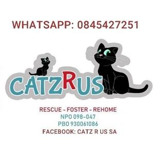 CatzRus Rescue Team (NPO 098-047 PBO 930061086). We turn heartache into happily-ever-afters. Adopt kittens or cats.
