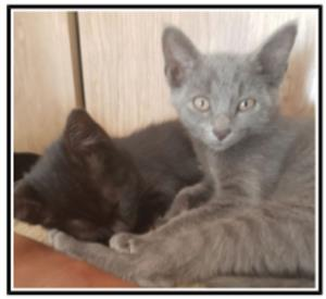 How awesome to make happy endings! These two could be part of your story. From CatzRus with love.