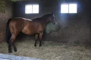 Stabling available Honeydew
