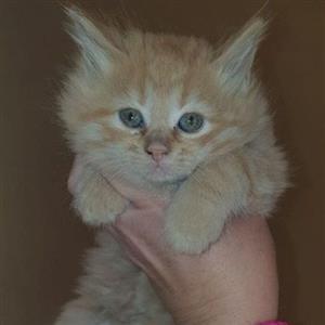 M C baby kitten