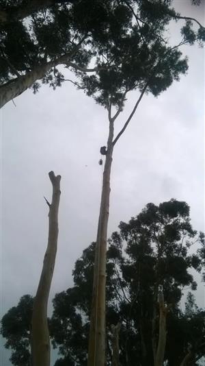 PROFESSIONAL  TREE  FALLING