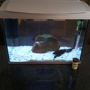 Fish Tank 4 Sale!!!