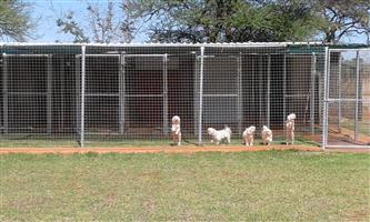 PETS HAVEN BOARDING KENNELS