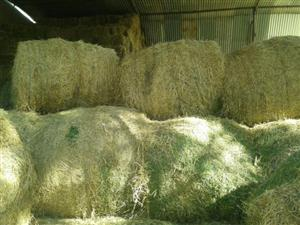 Best Qualty  Lucerne hay,teff and eragrostic square and round bales for sale .