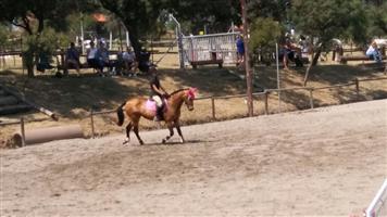 Beautiful boerperd cross mare for sale