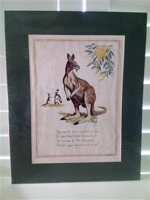 Guinness 'The Kangeroo' Genuine Print Circa: 1952 by Artist: C.F Tunicliffe