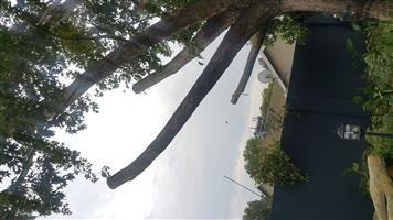 Tree felling in Vaal Triangle