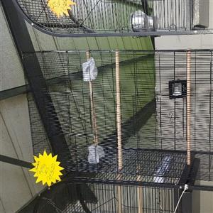 Parrot and bird cages