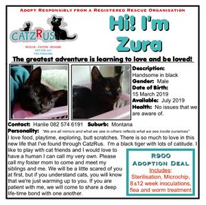 Zura is a CatzRus rescued kitten. His adoption fee includes sterlisation, vaccinations, microchip, etc