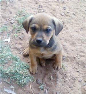 Small Mixed Breed Puppy
