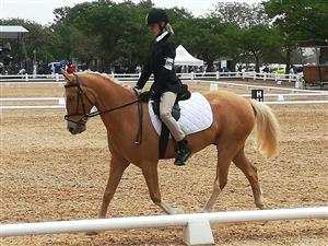 Palamino Pony