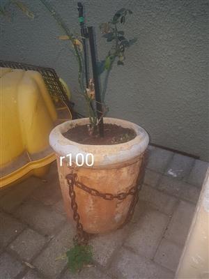 Beige round chain planter