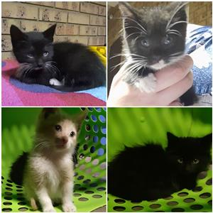 Rescued kittens to good homes
