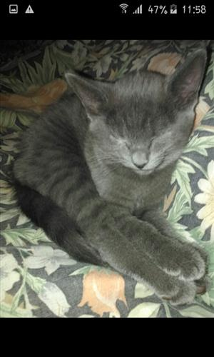 Three kittens looking for an forever home