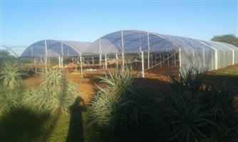 Vegetable Tunnel Greenhouses