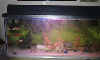 Fishtank  with extras