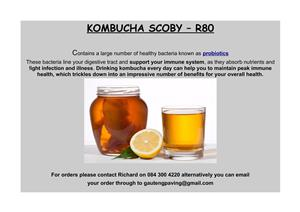 Kombucha scobies for sale