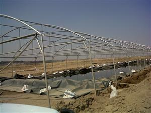 Greenhouse for Sale by sunrise Agrifarm with 200 micron new white plastic professionally built